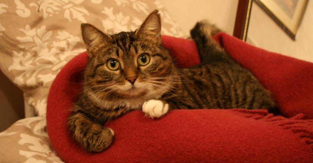 Photo: Flickr/.:I'm-a-kitty-cat!:.