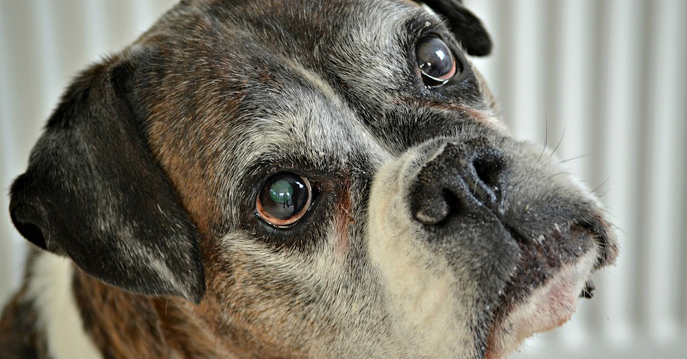 Source: Pixabay Elderly dogs make up a large portion of those found in shelters.