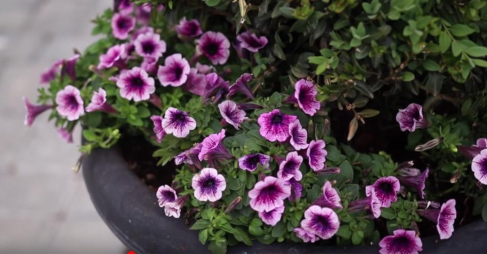 summer plant 2