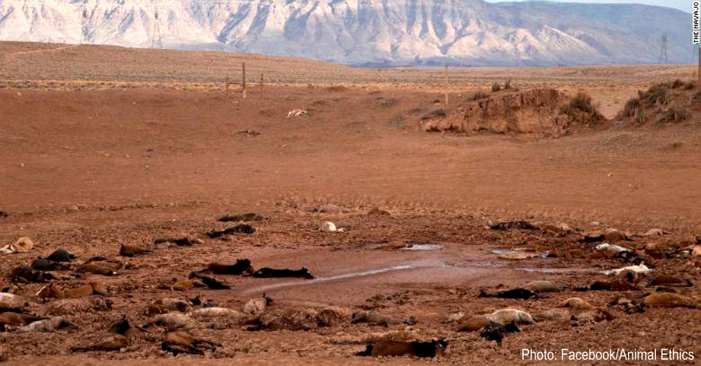 wild-horse-drought-1