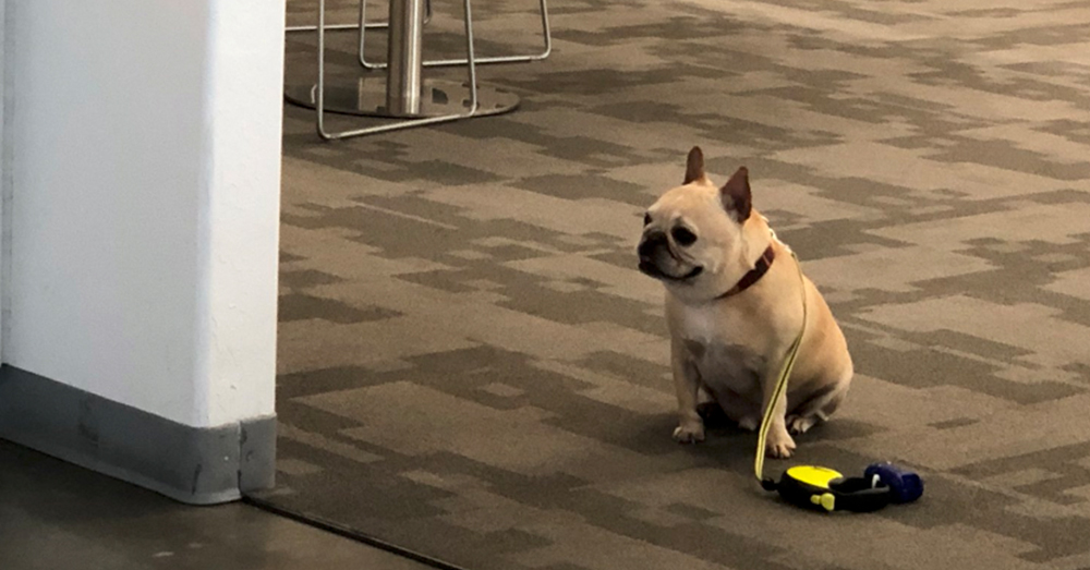 Source: Twitter/jaysc0 Patient Max waits outside the office cafe.