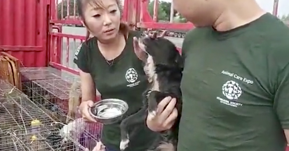 Source: Humane Society International HSI volunteers provided the means to rescue the animals, and get them to shelters.