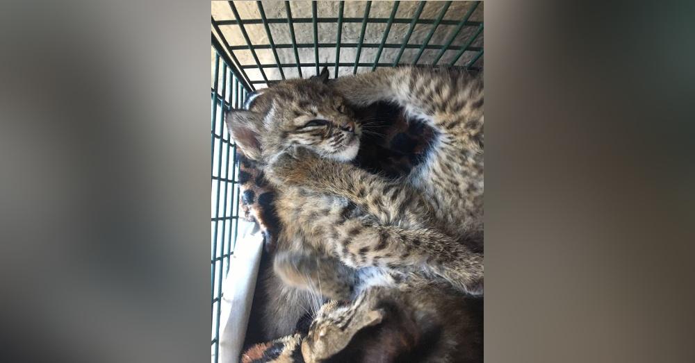 Photo: Facebook/City of San Antonio Animal Care Services