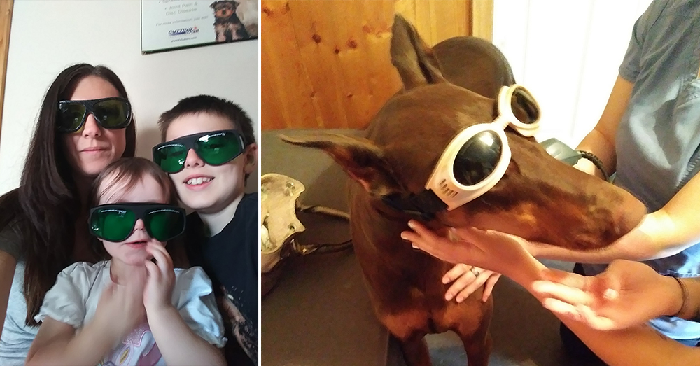 Source: Facebook/Copper's Road To Recovery Copper and family prepare for laser therapy.