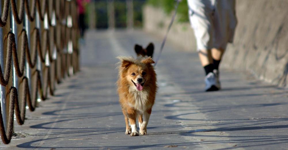 dog-asphalt-tips-4