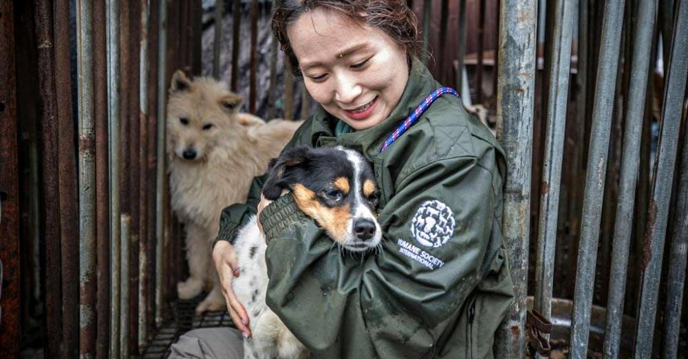 Photo: Facebook/Humane Society International