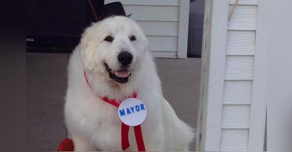 Photo: Facebook/Duke the Dog Mayor of Cormorant, Minnesota