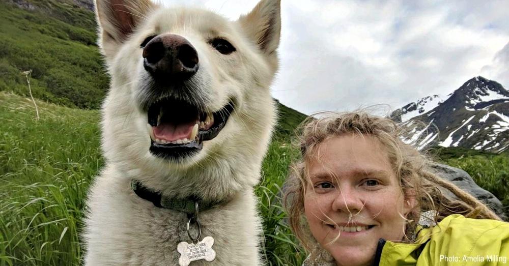 husky-deaf-hiker-1