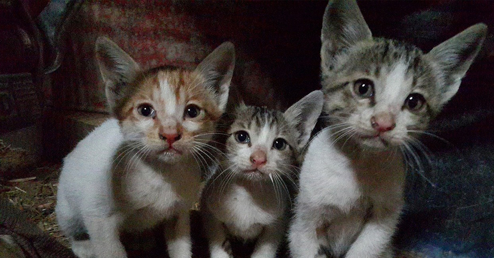 Source: Max Pixel At least 3,000 kittens have been killed in the program.