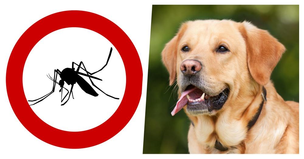 natural-bug-repellent-1