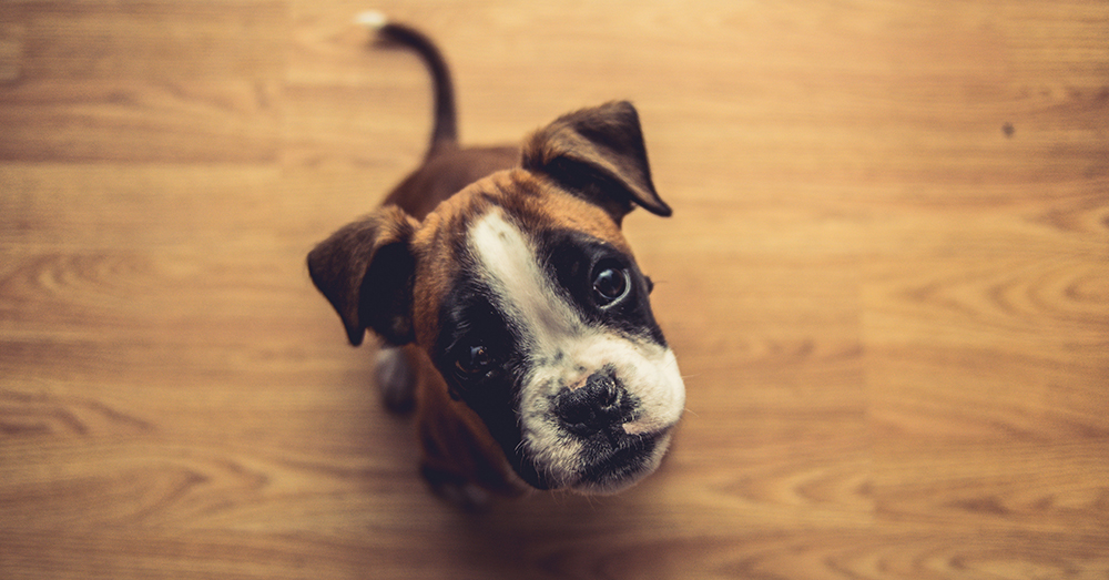 Photo by Marko Blažević on Unsplash Pets in the workplace are linked to lower cortisol levels.
