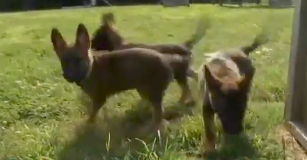 Source: YouTube/Robbie Stine The dogs are named Lilo, Stormy, Lexi and Ivy.