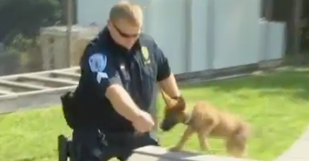 Source: YouTube/Robbie Stine A Richmond Police officer works with the puppies.