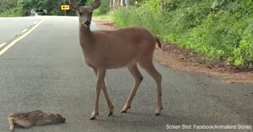 scared-baby-deer-1