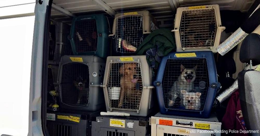 show-dogs-stolen-1