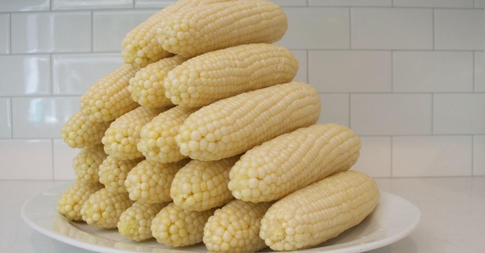 Cooler Corn OG1