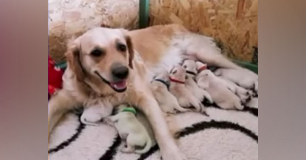 Source: YouTube/Screen 24 Forest is a green puppy, born to a Golden Retriever.