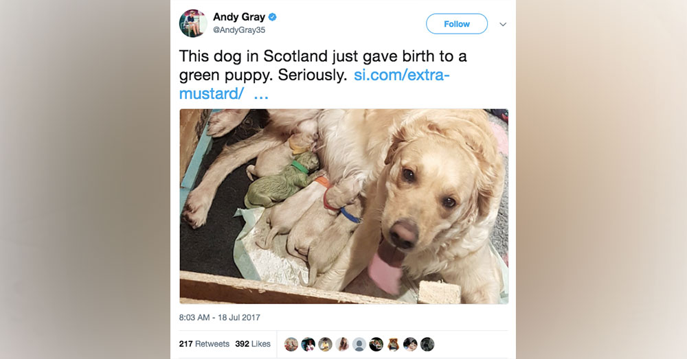 Source: Goodfullness The internet is in love with this green puppy!