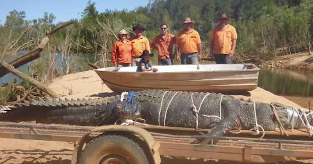 Source: YouTube/WION Rangers sedated the croc and secured its massive jaw.