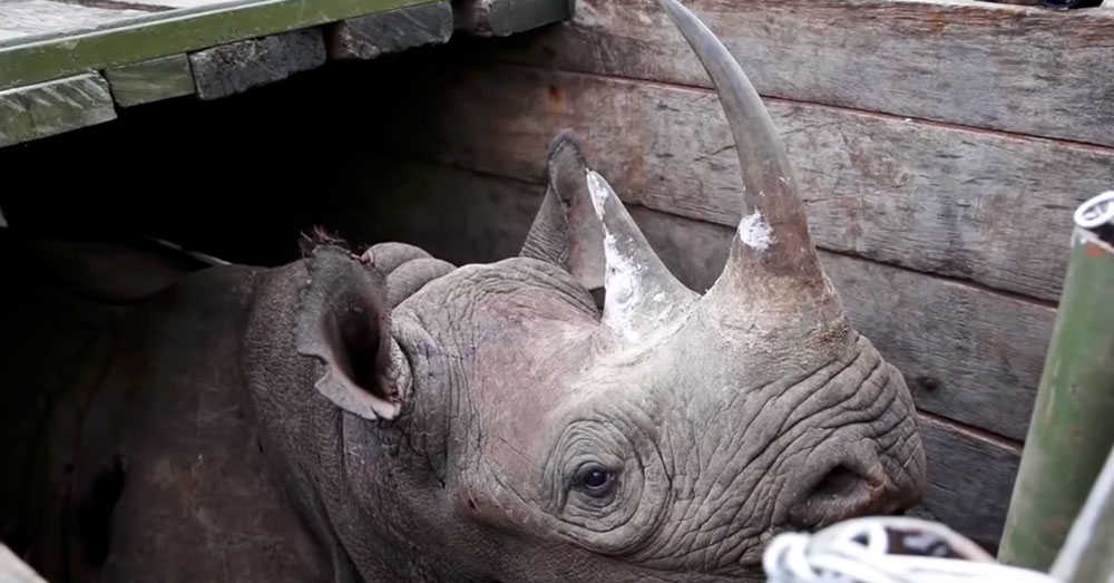 Source: YouTube/TIME An investigation into the rhinos' deaths is pending.