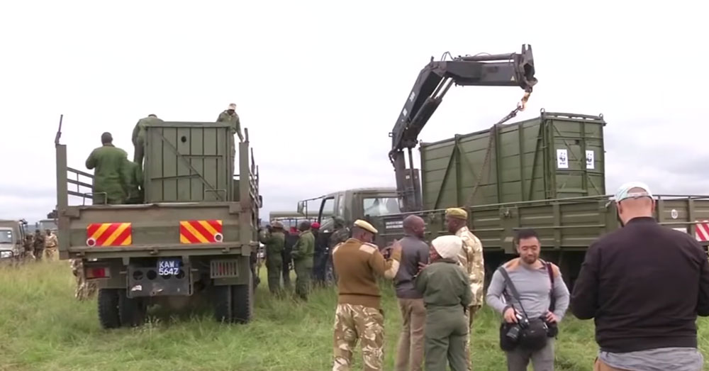 Source: YouTube/TIME Eleven black rhinos were transported from Nairobi to the Tsavo East National Park.