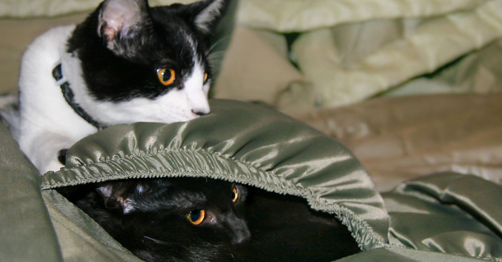 Source: PxHere The cats were discovered in a suitcase in Wallsend, England.