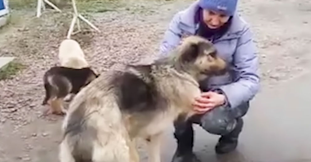 Source: YouTube/The Dodo A woman pets one of the dogs near Chernobyl.
