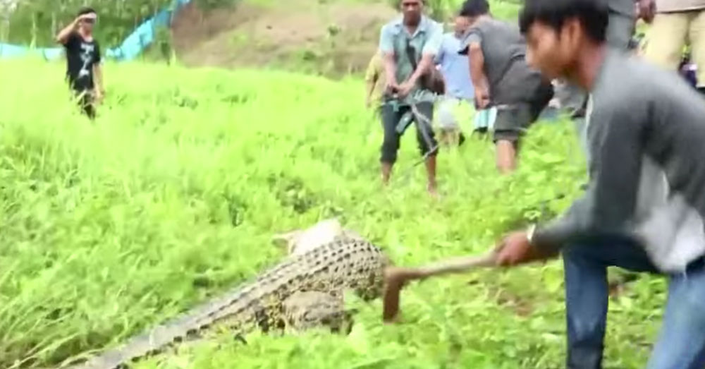 Source: YouTube/TIME Nearly 300 crocodiles were slaughtered.