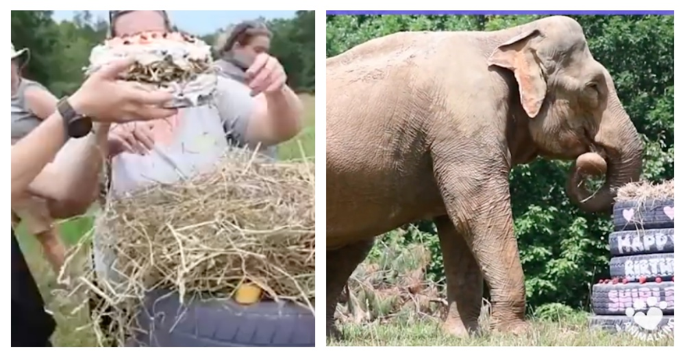 Screen Shots: Facebook/Animalkind Stories