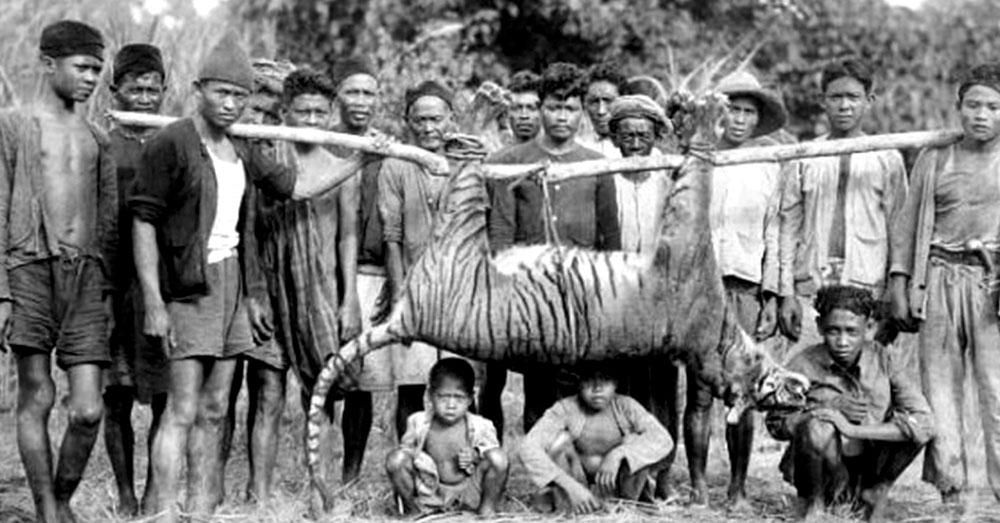 Source: YouTube/list25 Hunters pose with the now extinct Javan tiger.