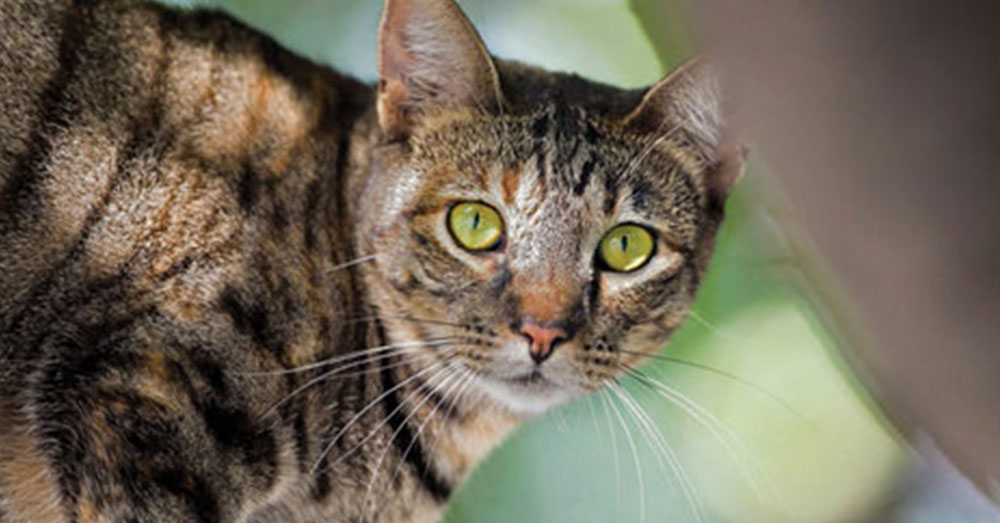Source: Humane Society More than 1.2 million feral cats live in the Netherlands.