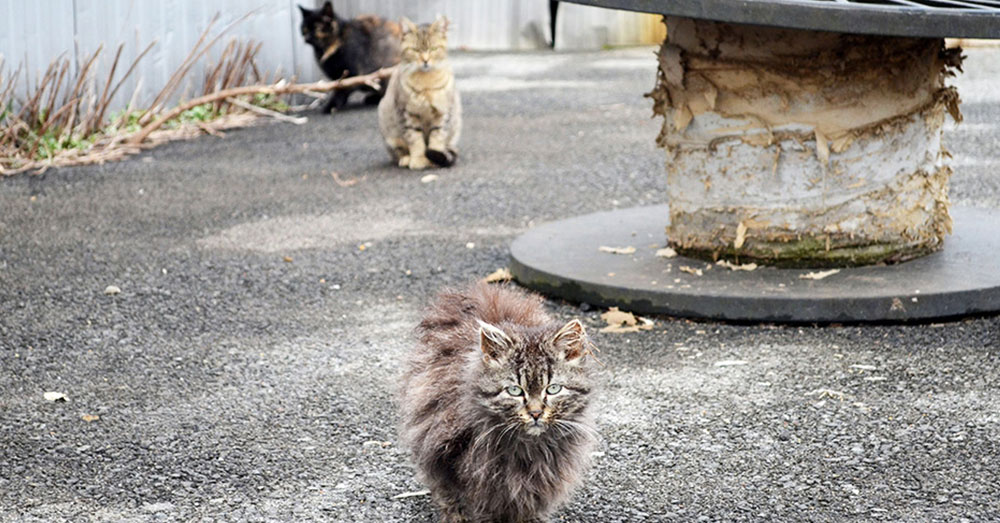 Source: ASPCA Feral cat culling is permitted in two of 17 provinces in the Netherlands.