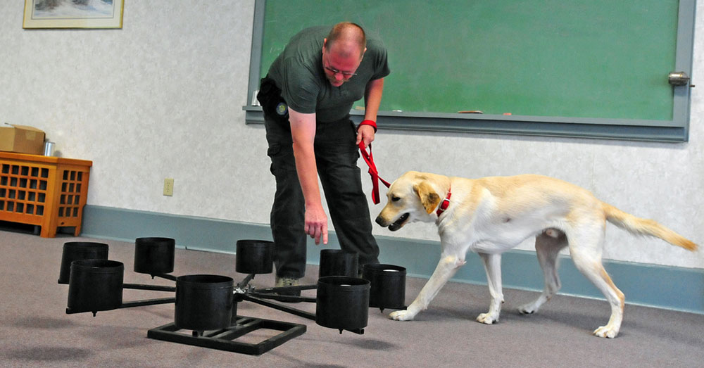 Source: flickr/State Farm Dogs like Flash go through rigorous training to achieve certification.
