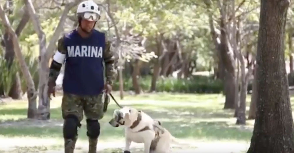 Source: YouTube/Despierta Veracruz Frida and her handler, Israel Arauz, work for the Mexican navy.