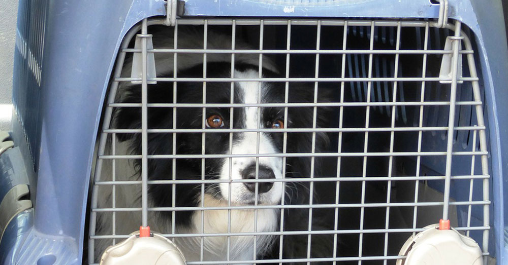 Source: Max Pixel Many pet owners put their dogs in crates.