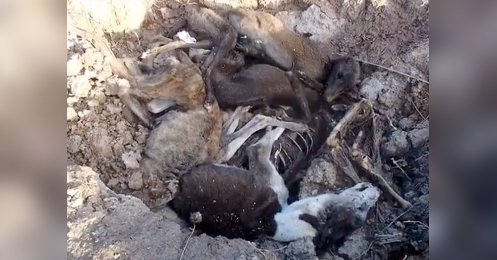 Source: YouTubeVito Babb The greyhounds were found in various stages of decomposition, possibly meaning they were not all disposed of at once.