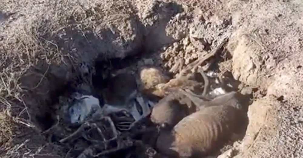 Source: YouTubeVito Babb Greyhound bodies buried in a shallow grave.