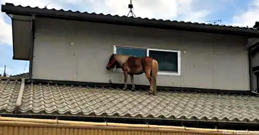 horse-on-rooftop-1