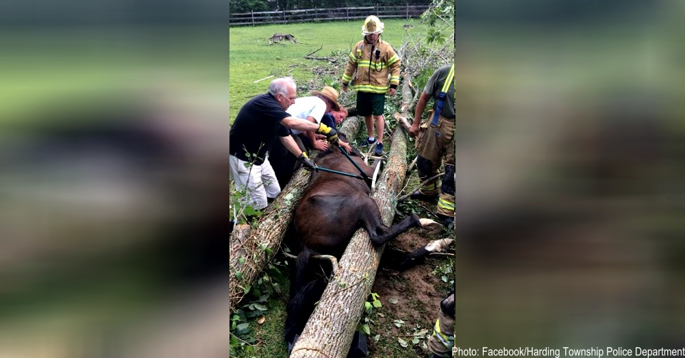 horse-trapped-nj-1