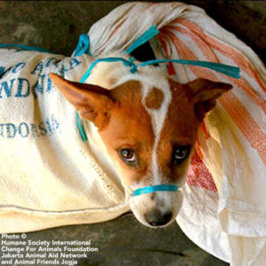 end indonesia dog meat trade