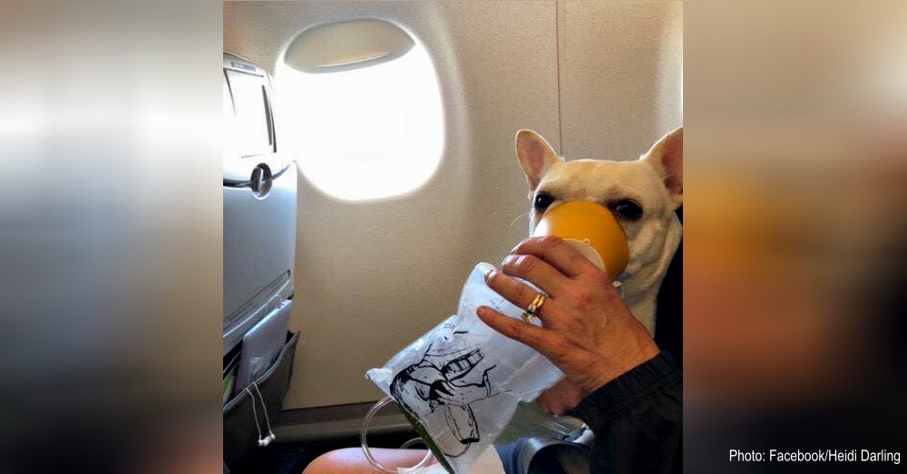 jetblue-saves-dog-1
