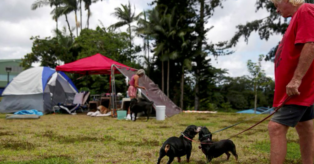 Source: YouTube/Wochit News Many animals have been displaced by Kilauea's eruption.