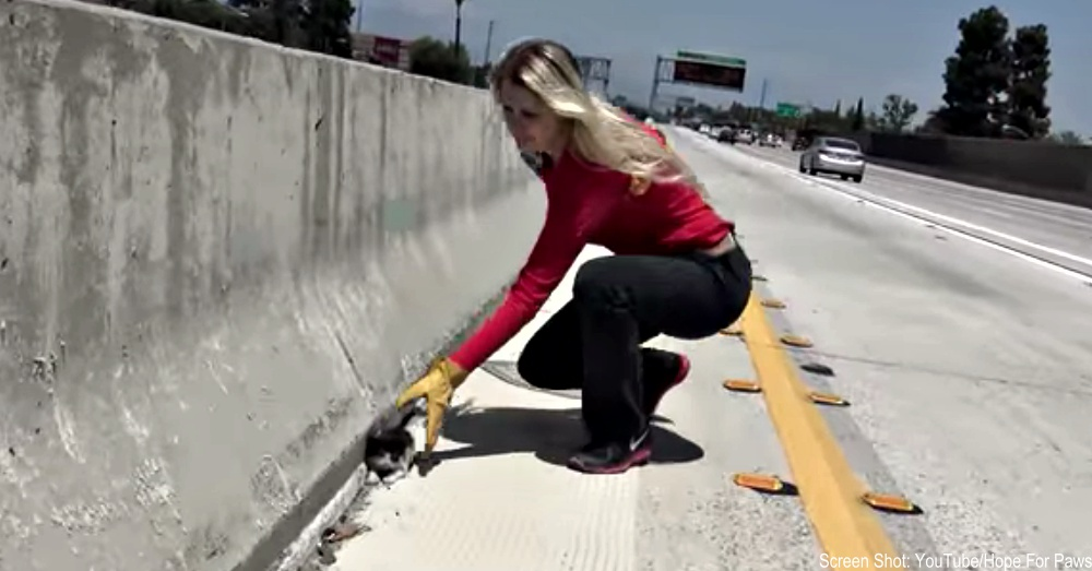 kitten-on-freeway-1