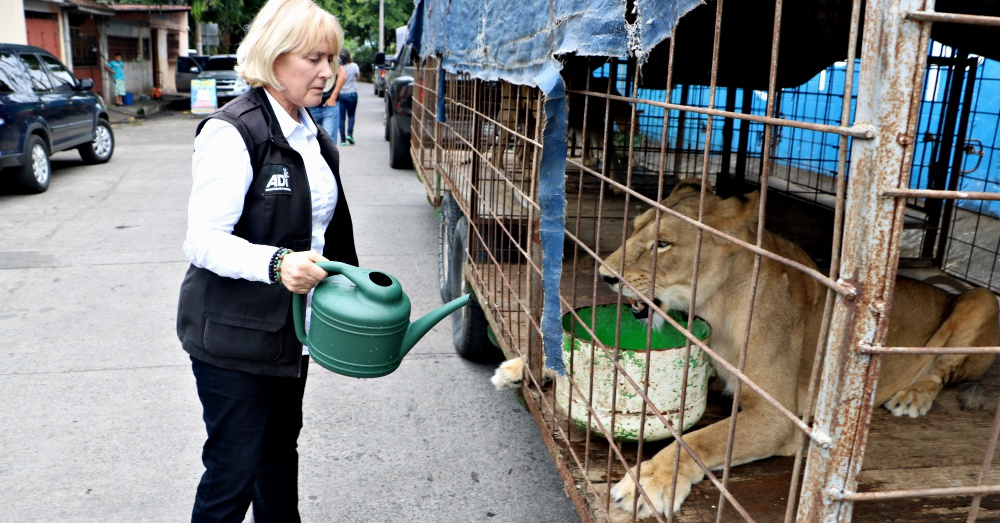 Photo: ADI Lioness receiving fresh water from ADI President, Jan Creamer.
