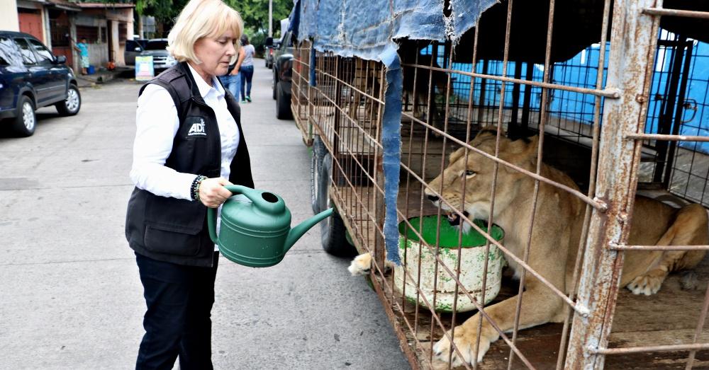 Photo: ADI Lioness receiving fresh water from ADI President, Jan Creamer.