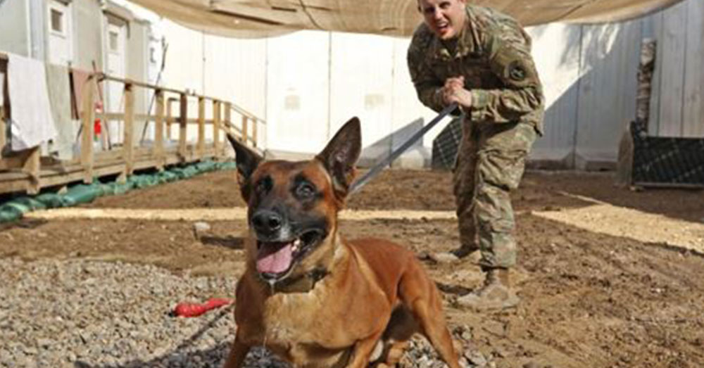 Source: U.S. Central Command Rrobiek, a Belgian Malinois military working dog, and his handler, U.S. Army Staff Sgt. Charles Ogin, 3rd Infantry Regiment, practice bite training after work Feb. 14 in Baghdad, Iraq.