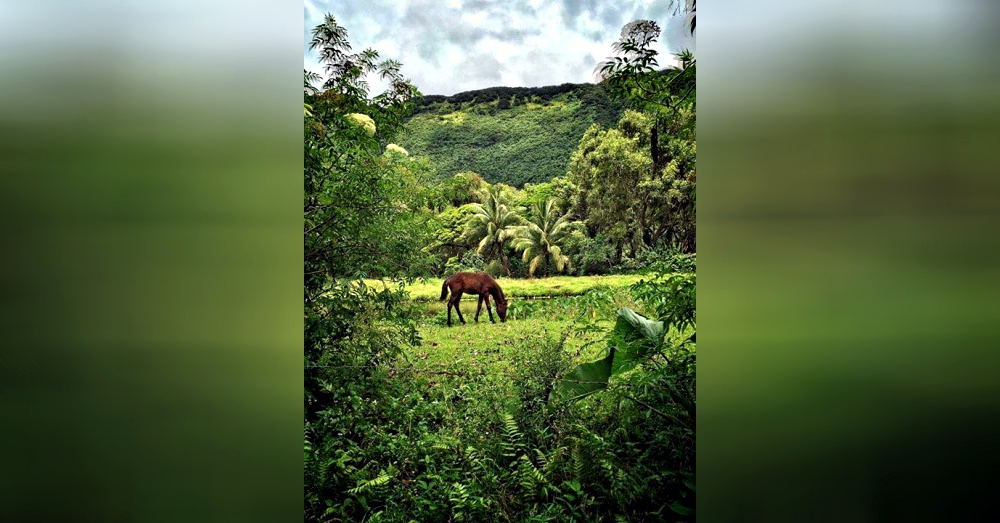 Photo: Facebook/Na'alapa Stables - Waipi'o Valley Horseback Adventures
