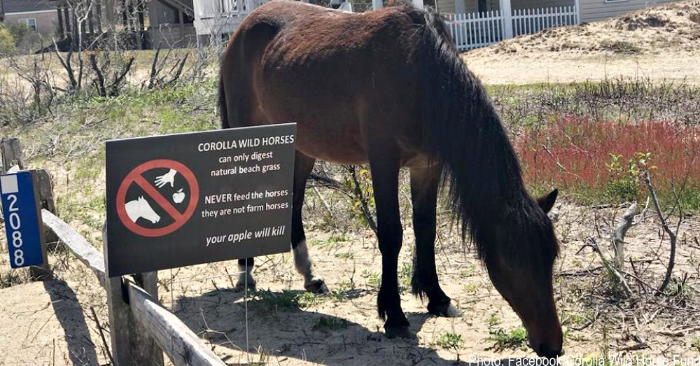 nc-wild-horses-1