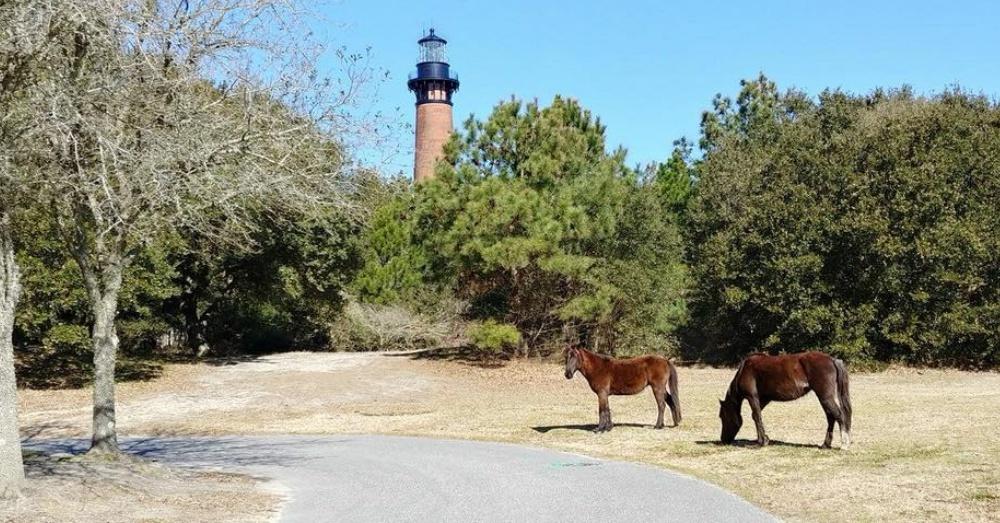 Photo: Facebook/Corolla Wild Horse Fund