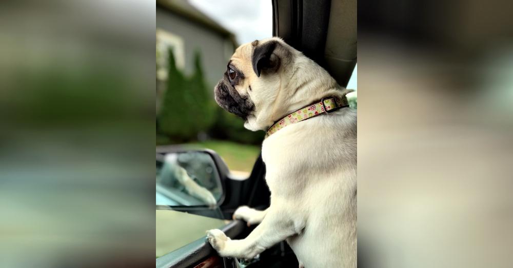 pet-owner-excuses-1